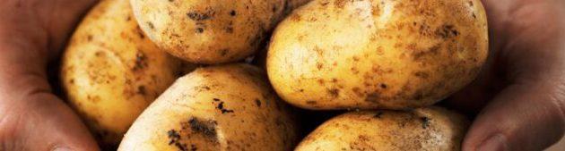 البطاطس فوائدها ومحاذيرها