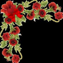 سكرابز زوايا ورد احمر