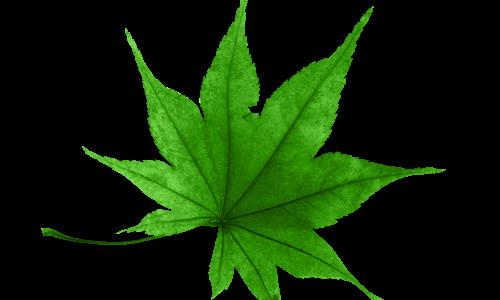 سكرابز ورق شجر اخضر